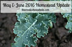 Check out what's been going on around the homestead in May and June...and for a special and exciting announcement:)