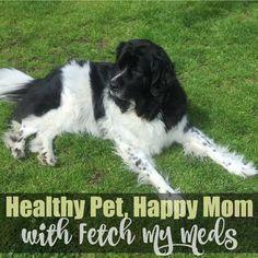 #ad http://thestuffofsuccess.com/2017/06/16/healthy-dog-happy-mom-with-fetch-my-meds/ Healthy Dog, Happy Mom With Fetch My Meds #FetchMyMeds  100% FREE @FetchMyMeds pet prescription discount card 