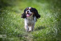 best mans friend by wachter972. Please Like http://fb.me/go4photos and Follow @go4fotos Thank You. :-)