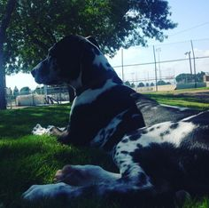 Chilling at Las Cruces Dog Park - Las Cruces, NM - Angus Off-Leash