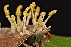 Fungus covered moth (Cordyceps)   by pbertner