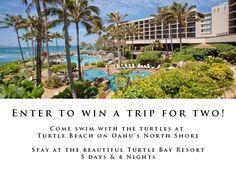 Win a trip to Hawaii! Honolulu Jewelry Company is giving away a trip to the Turtle Bay Resort!