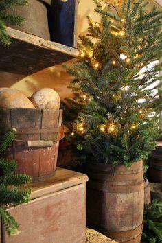 Rustic Pine...tree in an old barrel.