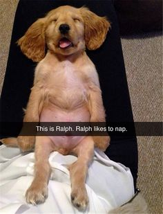 Funny Animal Pictures Of The Day – 25 Pics He looks like scrappy from scooby doo!!