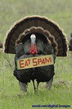 http://wmiii.net/fb_shared/spam/TURKEY-EAT-SPAM.jpg