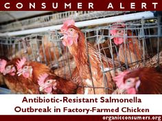 The CDC says that hospitalization rates for the people that have been sickened in the most recent salmonella outbreak is twice as high as usual-due to antibiotic resistant #SuperBugs from #CAFO chickens.