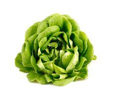 butter lettuce - Google-haku