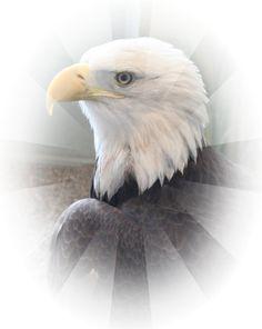 Majestic Bald Eagle Portrait by NaturesBeautybyLJ on Etsy, $10.00