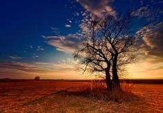 Breathtaking Tree Photography Collection