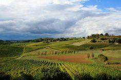 Le colline del Gavi by C. Pellerino #socialchefPiemonte