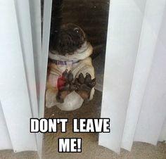#meme #Pug #love
