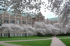 potentially the happiest place on earth -- university of washington campus