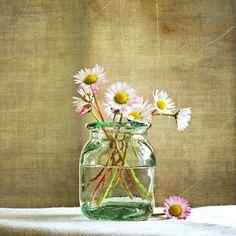 First daisies... - Texture by Alin B.