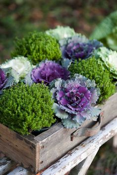 kale and moss and an old drawer or box...very natural and pretty floral decor idea for any time of year