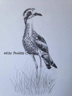 Curlew Bird, Graphite Drawings, Bird Drawings, Tattoo Ideas, Pencil, Birds, Babies, Ink, Facebook
