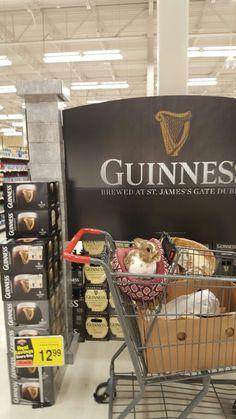 Guinness, Popcorn Maker, Bunnies, Brewing, Kitchen Appliances, Home, Diy Kitchen Appliances, Home Appliances, Rabbits