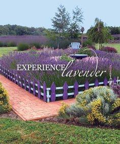 Image result for lavender gardens