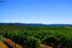 Chamisal Winery- Central Coast, Ca.  Photo By: Patrick V. Photography