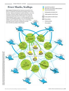 "Food Web in Action ROLE: art direction and graphic (spot illustrations by Portia Sloan Rollings); PRODUCT: ""Ecosystems on the Brink,"" by Carl Zimmer, Scientific American, October 2012; Sources: ""Cascading Top-Down Effects of Changing Oceanic Predator Abundances,"" by Julia K. Baum and Boris Worm, in Journal of Animal Ecology, VOL. 78, NO. 4; July 2009, and ""Cascading Effects of the Loss of Apex Predatory Sharks from a Coastal Ocean,"" by Ransom A. Myers, Julia K. Baum, Travis D. Shepherd, Sean…"
