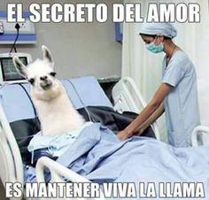 Para todos los que quieren saber cual es el secreto del amor :v Para más imágenes graciosas visita: https://www.Huevadas.net #meme #humor #chistes #viral #amor #huevadasnet