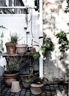 Repot the outside plants and get them sheltered for late fall and winter.