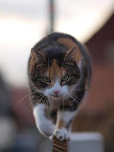 Beware of the cat!