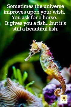 Be open to the graciousness of life. It knows better than you what is needed. Mythology Books, Life Changing Quotes, Law Of Attraction Tips, Above The Clouds, What Is Need, Beautiful Fish, Wisdom Quotes, Spiritual Quotes, Spiritual Awakening