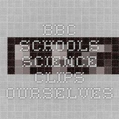 BBC - Schools Science Clips - Ourselves