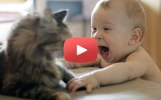 Il gatto e il bambino, video bellissimo!