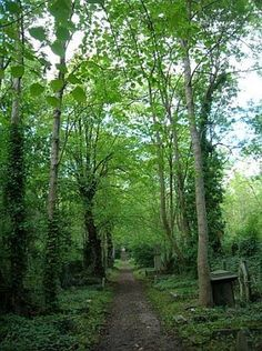 Photos for Highgate Cemetery | Yelp