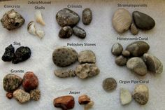 When you think of Lake Michigan, does fossil hunting come to mind? Many people may not be aware that the beaches of Lake Michigan can be a hot spot for fossils hunters. Aside from fossils, Lake Michigan beaches are also home to many fascinating rocks.