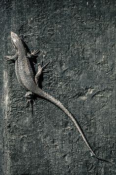 Granite Lizard by George