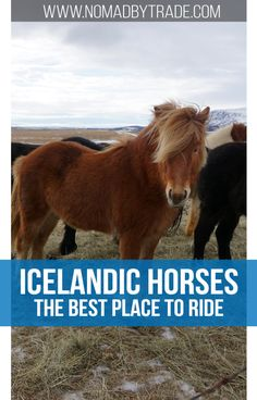 The best spot to ride Icelandic horses in Iceland. You'll fall in love with the view and the horses. #Iceland | #Vik | #RingRoad | #IcelandicHorses | #HorsebackRiding