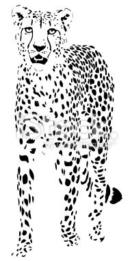 This is a cool vector illustration of a cheetah. I like how it uses positive and negative space together t create the image. Also I like the black and white color scheme that keeps it simple and helps the eyes focus on the design. Cheetah vector Royalty Free Stock Vector Art Illustration