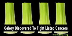 Celery Discovered To Fight Listed Cancers | Family Health Freedom Network