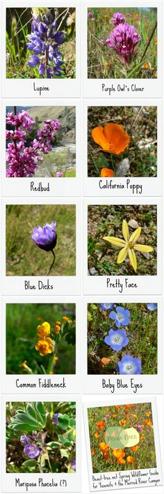 Spring Wildflower Guide for Yosemite & the Merced River Canyon