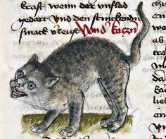 Grinning cat: Conrad of Megenberg, 'Buch der Natur', Germany ca. 1434. Strasbourg, Bibliothèque nationale et universitaire, Ms.2.264, folio 85r.