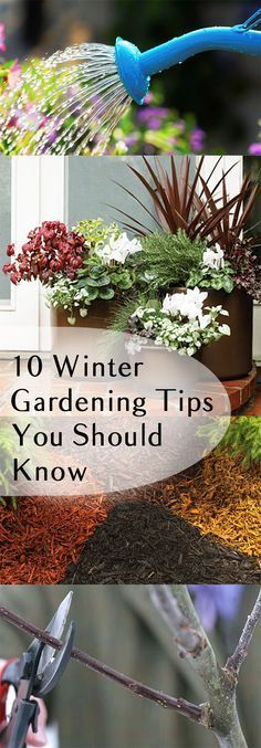 10 Winter Gardening Tips You Should Know to protect your plants this winter . Fall is coming, so start preparing by winterizing