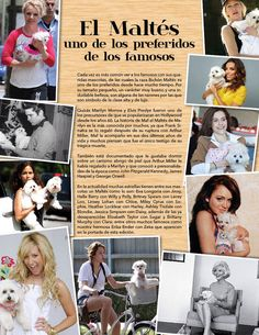 El Maltés uno de los preferidos de los famosos!  Un artículo de nuestra 2da edición  Enero-Febrero 2015.  #PetsWorldMagazine #RevistaDeMascotas #Panama #FamososYSusMascotas