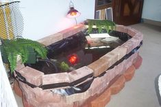 1000 Images About Pets Turtles On Pinterest Turtle Tanks Indoor Pond And Turtles