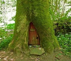 The REAL tree house