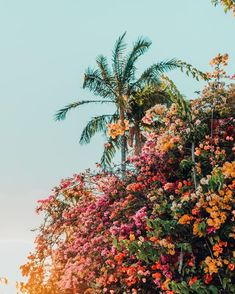 beautiful flowers and plants No Rain, Flower Aesthetic, Aesthetic Girl, Aesthetic Pictures, Picture Wall, Picture Ideas, Aesthetic Wallpapers, Cute Wallpapers, Pretty Pictures
