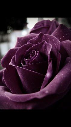 Color Palette: Deep Purple, Blackberry, and Aubergine Beautiful! Deep Purple, Blackberry, and Aubergine Deep Purple, Purple Love, All Things Purple, Purple Rain, Shades Of Purple, Purple Grey, Purple Velvet, The Color Purple, Magenta