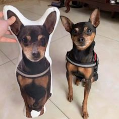 Customized Dog Photo Pillow Memorable Photo Pillow with your lovely dog. Baby Puppies, Cute Puppies, Cute Dogs, Puppies Tips, Small Puppies, Gifts For Pet Lovers, Pet Gifts, Pet Loss Grief, Photo Pillows
