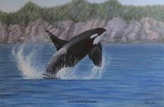 """Orca in Flight"" Acrylic on Canvas Original painting of Orca - Killer Whale -Nature and wildlife Original watercolor and acrylic paintings of nature and wildlfe - Available Originals by Valerie Rogers"