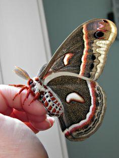 The Summer of Moths