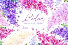 Lilac. Watercolor collection by OctopusArtis on Creative Market