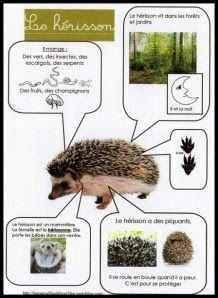 herisson Saved one of these from a dog in Spain Teaching Science, Science For Kids, Science And Nature, French Teacher, Teaching French, French Classroom, French Resources, Animal Habitats, Animal Projects