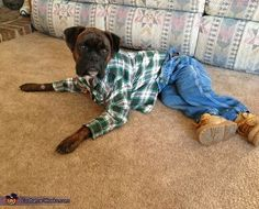 make clothes for dogs | Mr. Dog is lying on the floor wearing jeans, boots and a flannel shirt ...