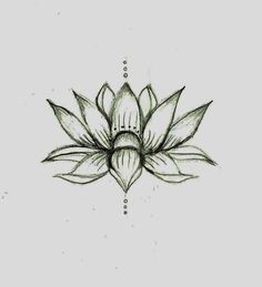 Lotus Flower Drawing Lotus Flower Drawing Sketch